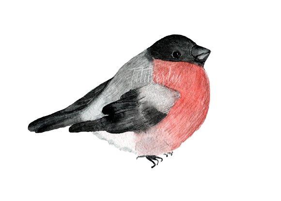 Watercolor Birds Clip Art example image 3
