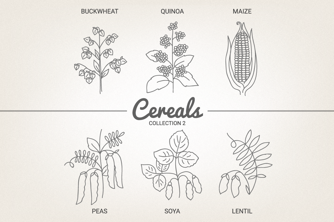 12 Cereals - Illustration & Patterns example image 5