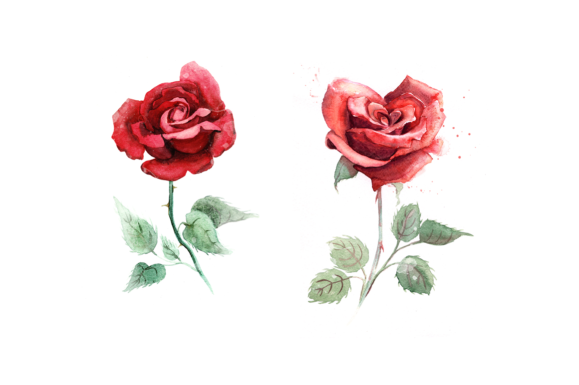 5 watercolor roses example image 4