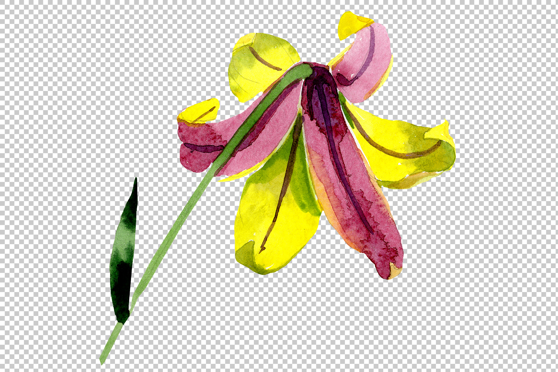 Wildflower lemon lily PNG watercolor set example image 6