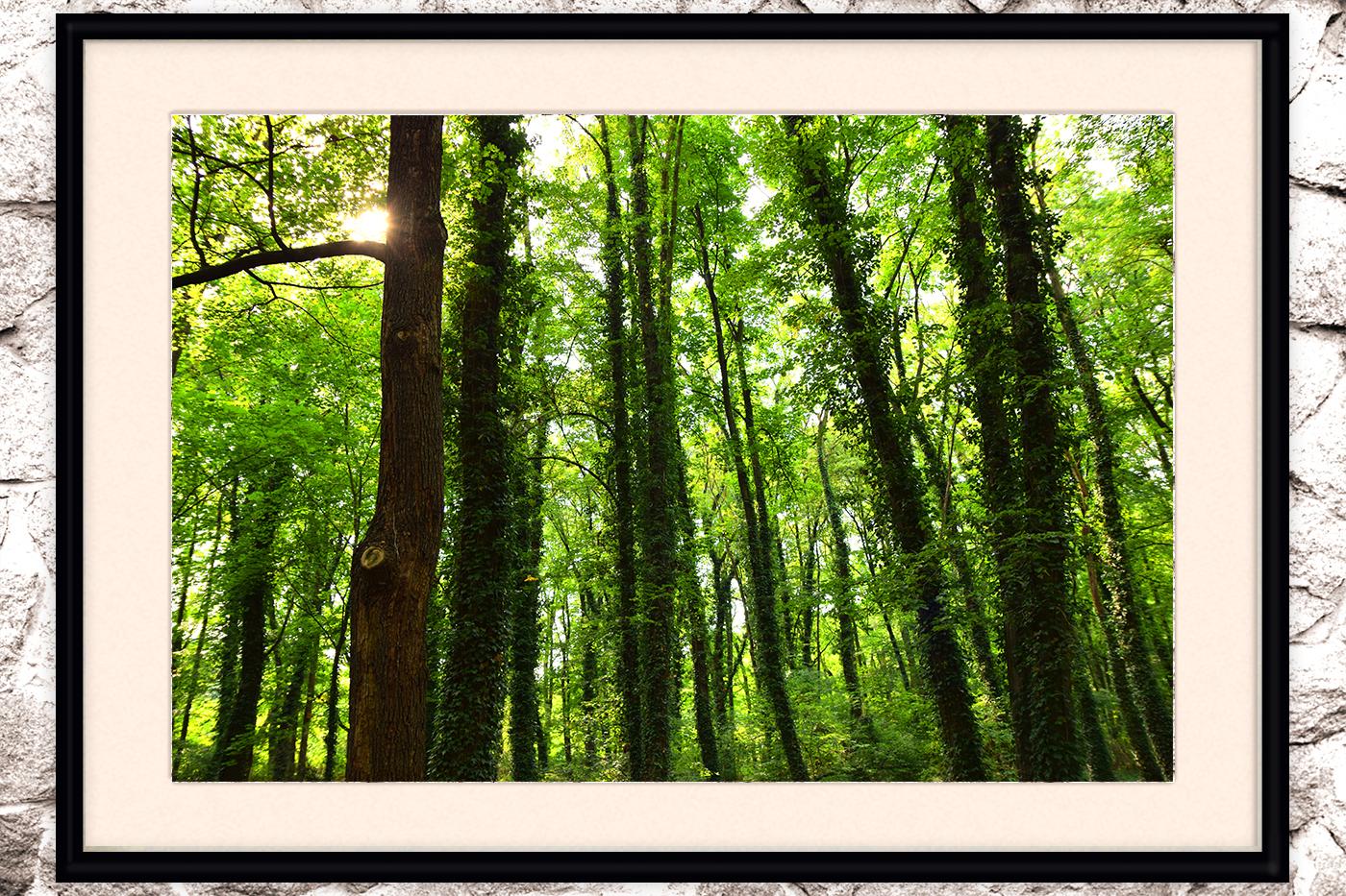Nature photo, landscape photo, forest photo, spring photo example image 2