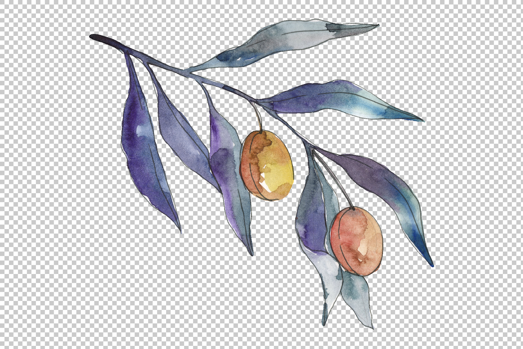 Olives 3 Watercolor png example image 3