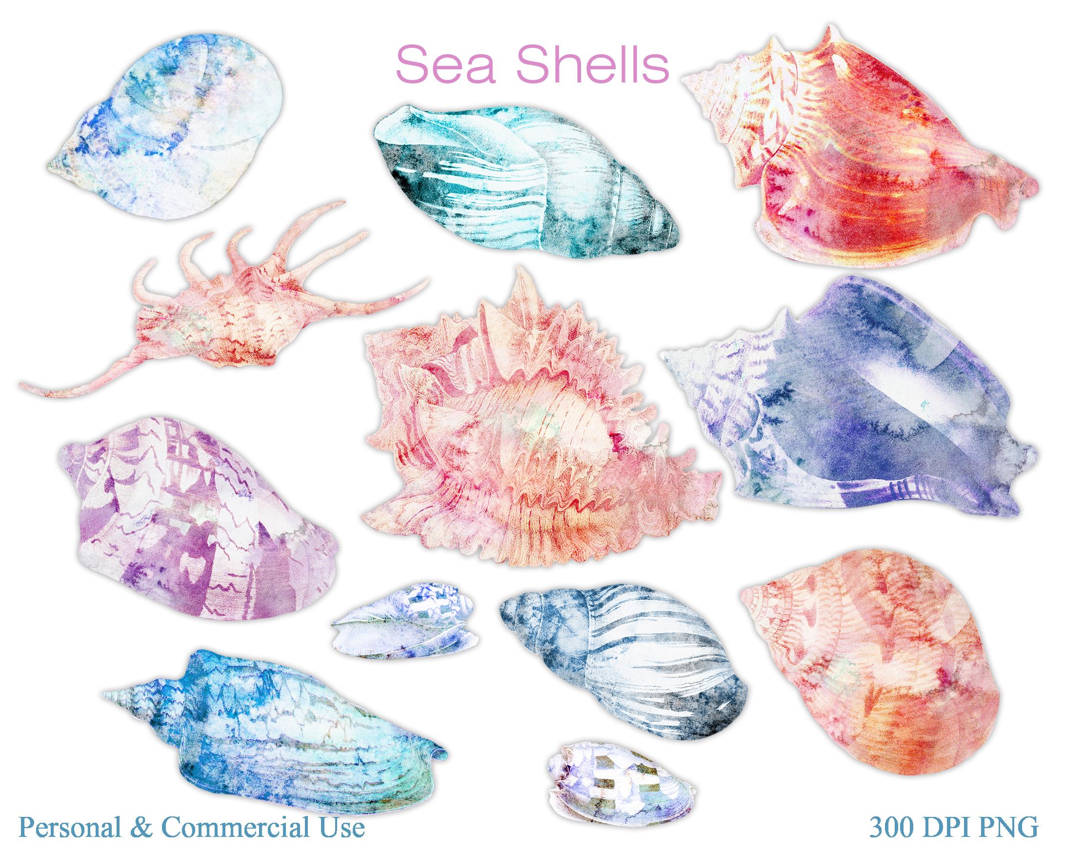 Beach Seashells Ocean Shells Clipart example image 4
