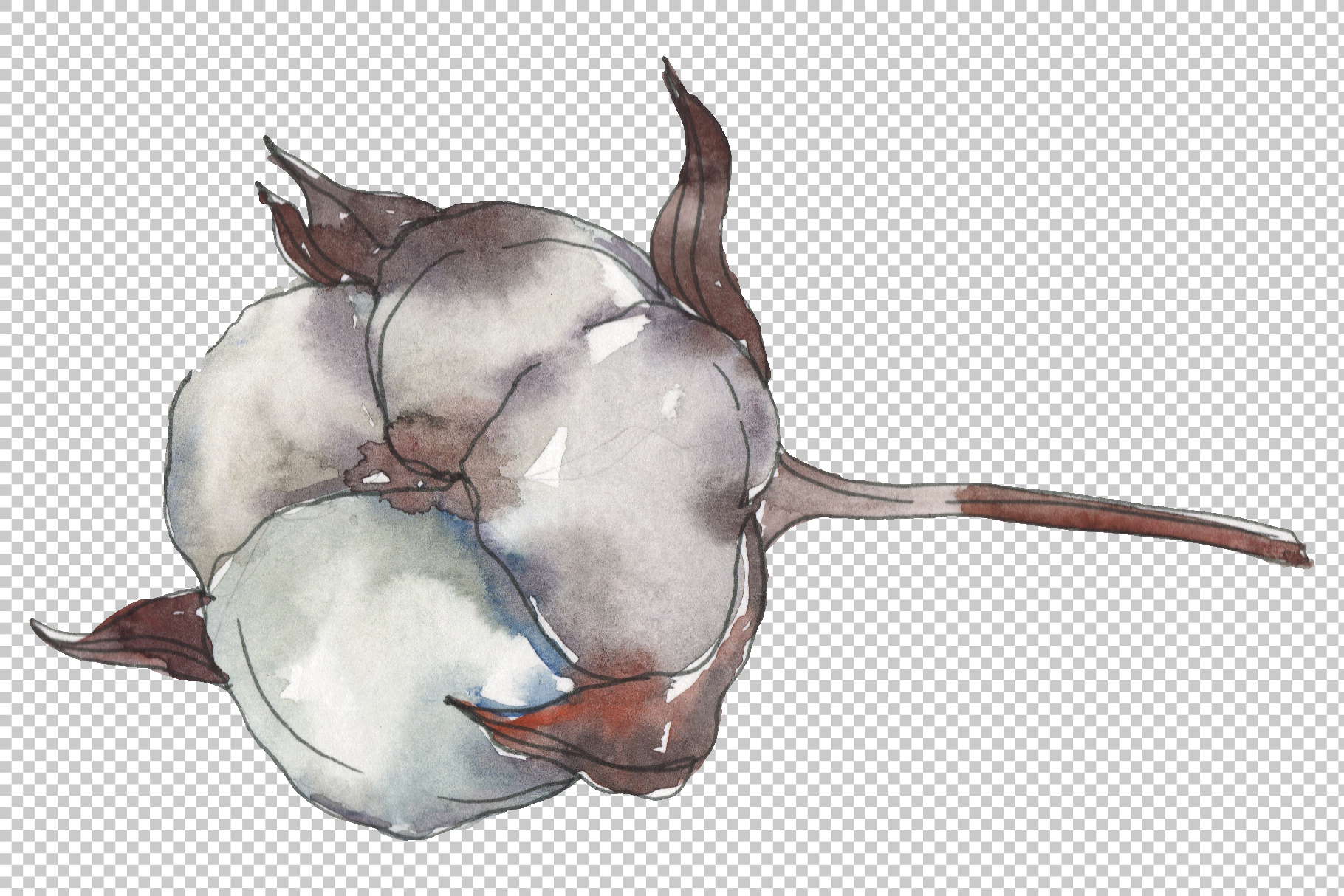 Cotton 2 Watercolor png example image 7