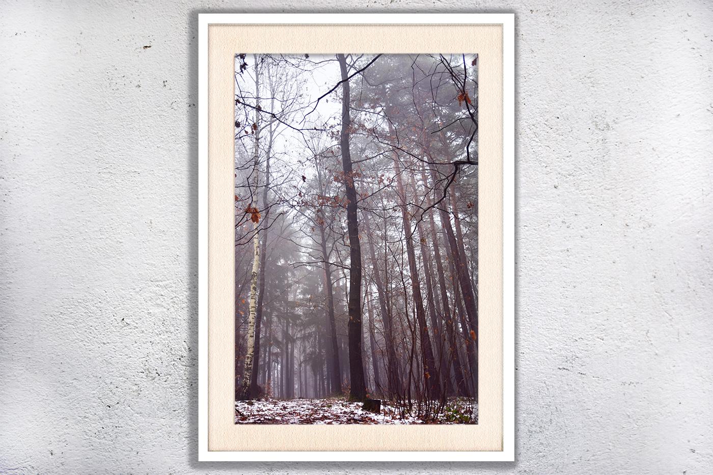 Nature photo, landscape photo, forest photo, winter photo example image 3