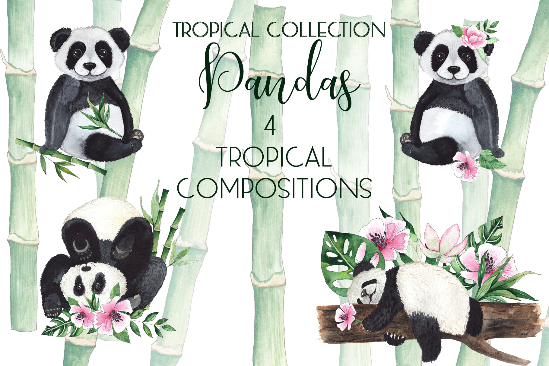 Pandas. Tropical collection example image 6