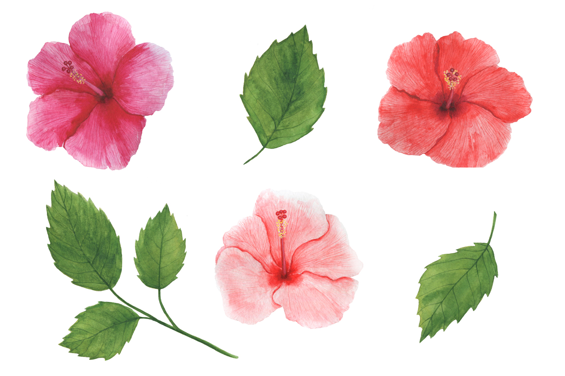 Watercolor tropical clipart example image 3