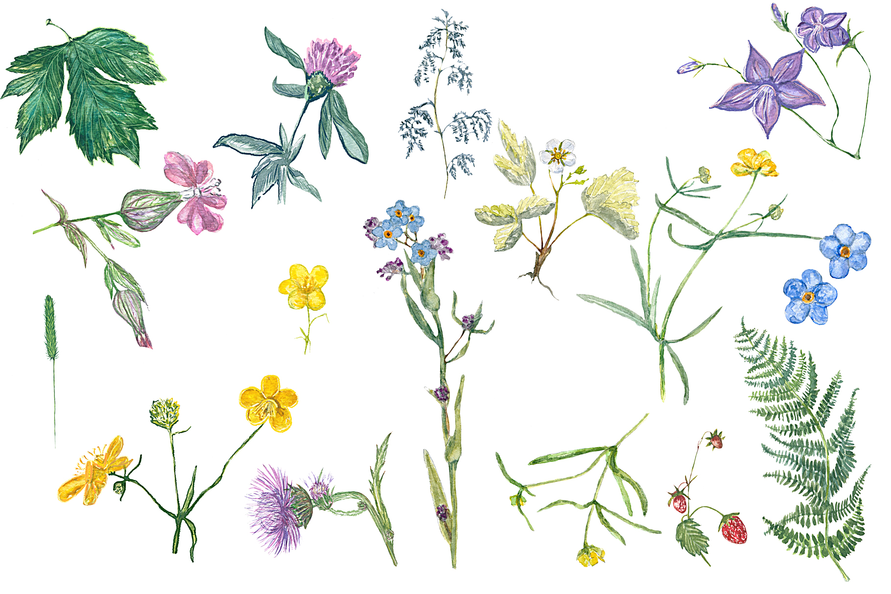 Watercolor grass and wildflowers example image 3