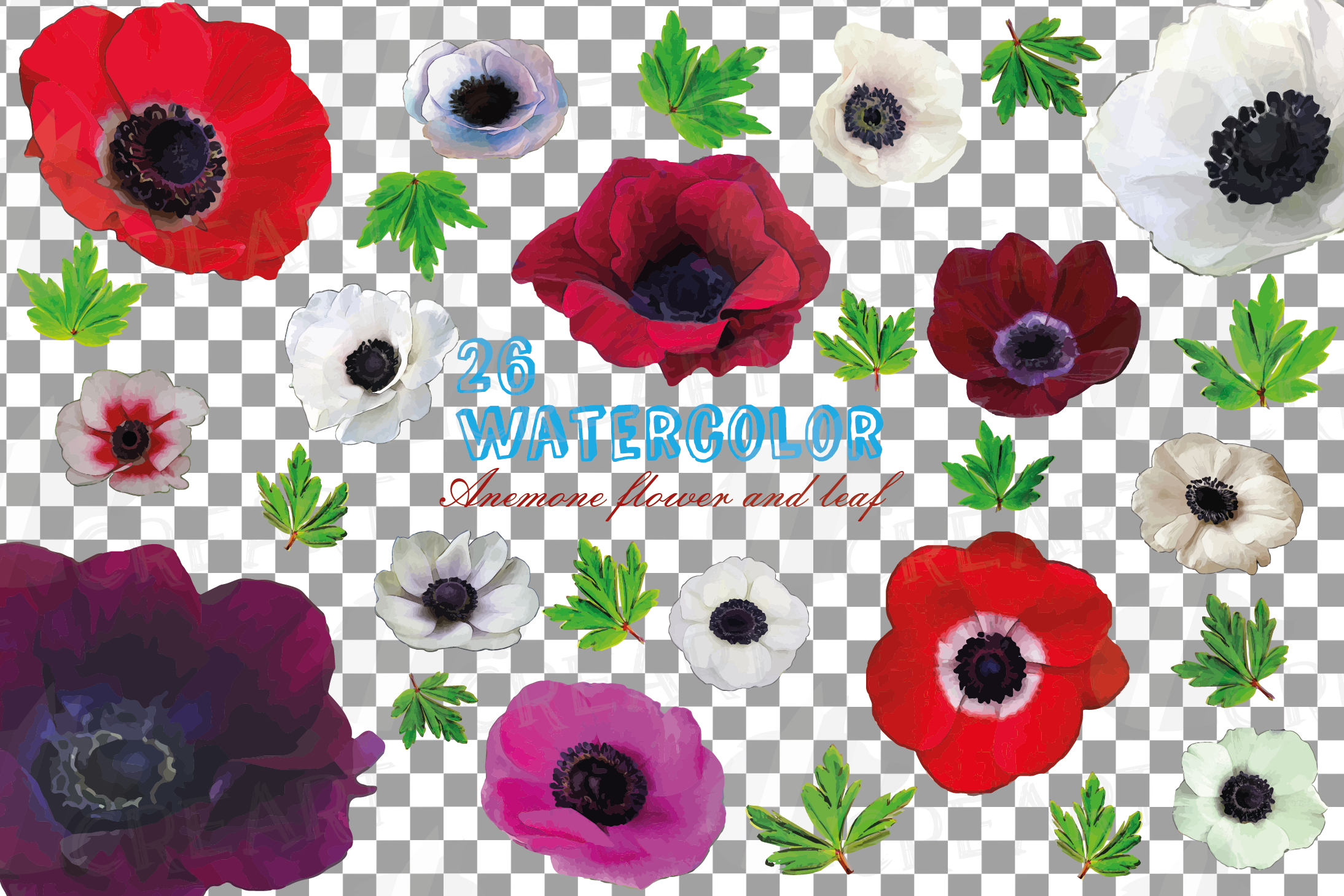 Anemone watercolor clip art pack, watercolor anemone design example image 2