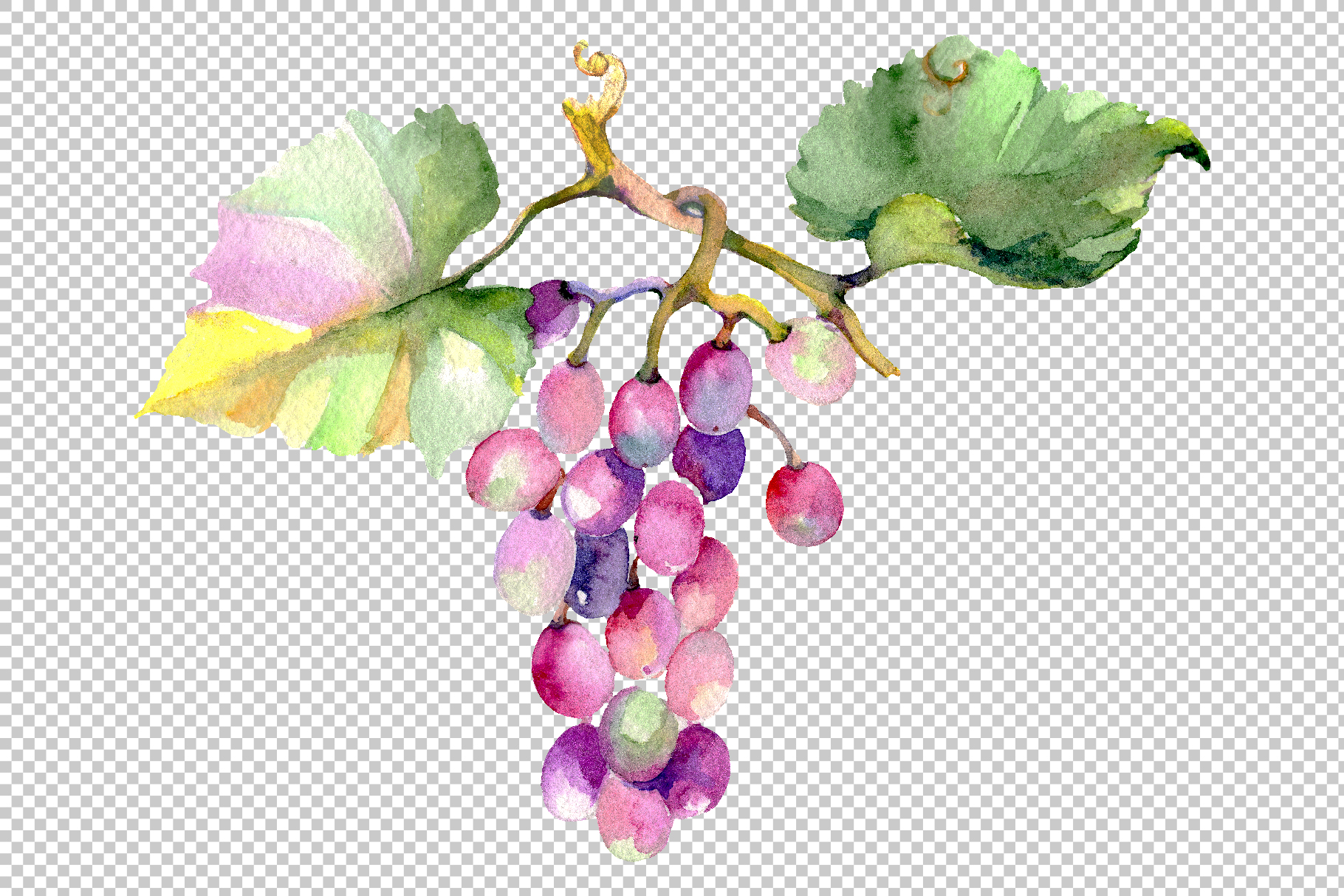 Blue grapes Watercolor png example image 7