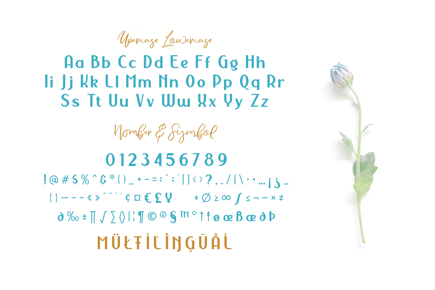 NERMOLA Scripcy Font example image 2