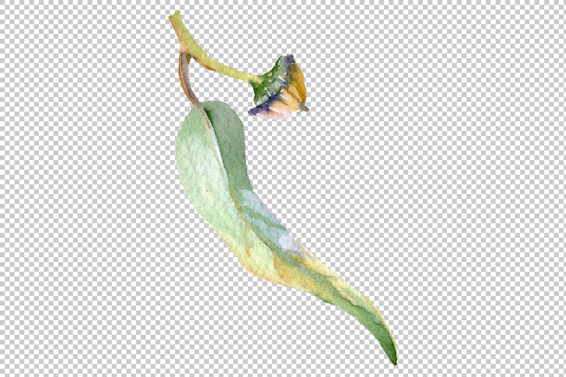 Eucalyptus Watercolor png example image 2