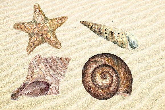 Watercolor Seashells Set - 8Png example image 2