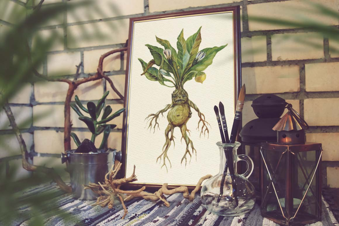 Watercolor Alchemy Medicinal Herbs example image 2