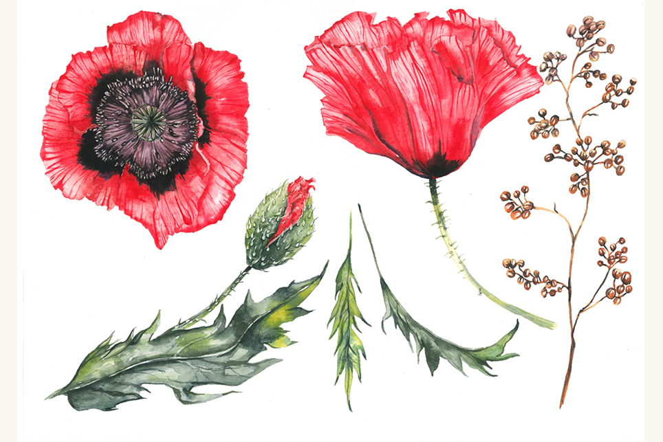 Flower set, Peony clipart, flower clipart, floral elements example image 4