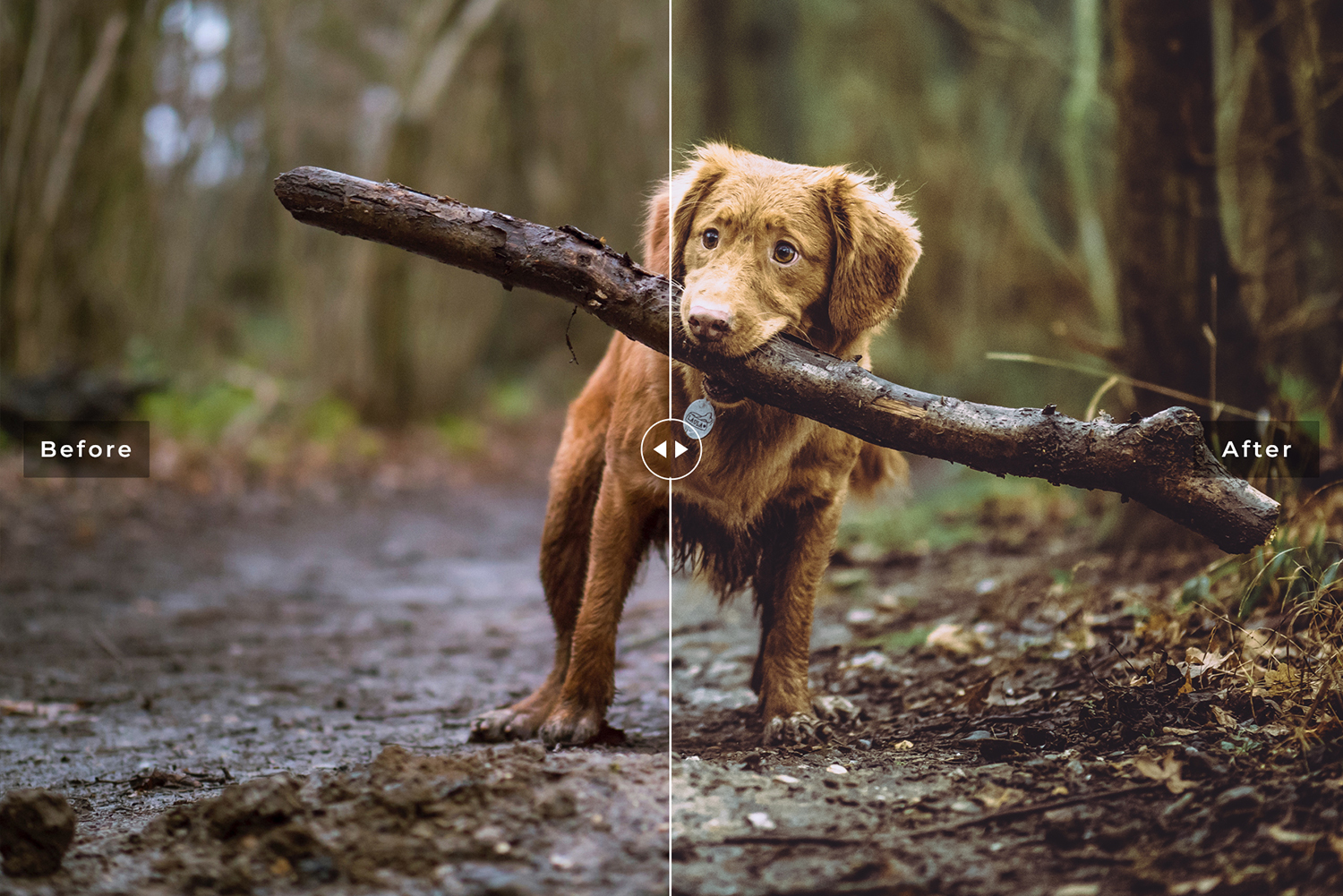 My Dog Mobile and Desktop Lightroom Presets example image 3
