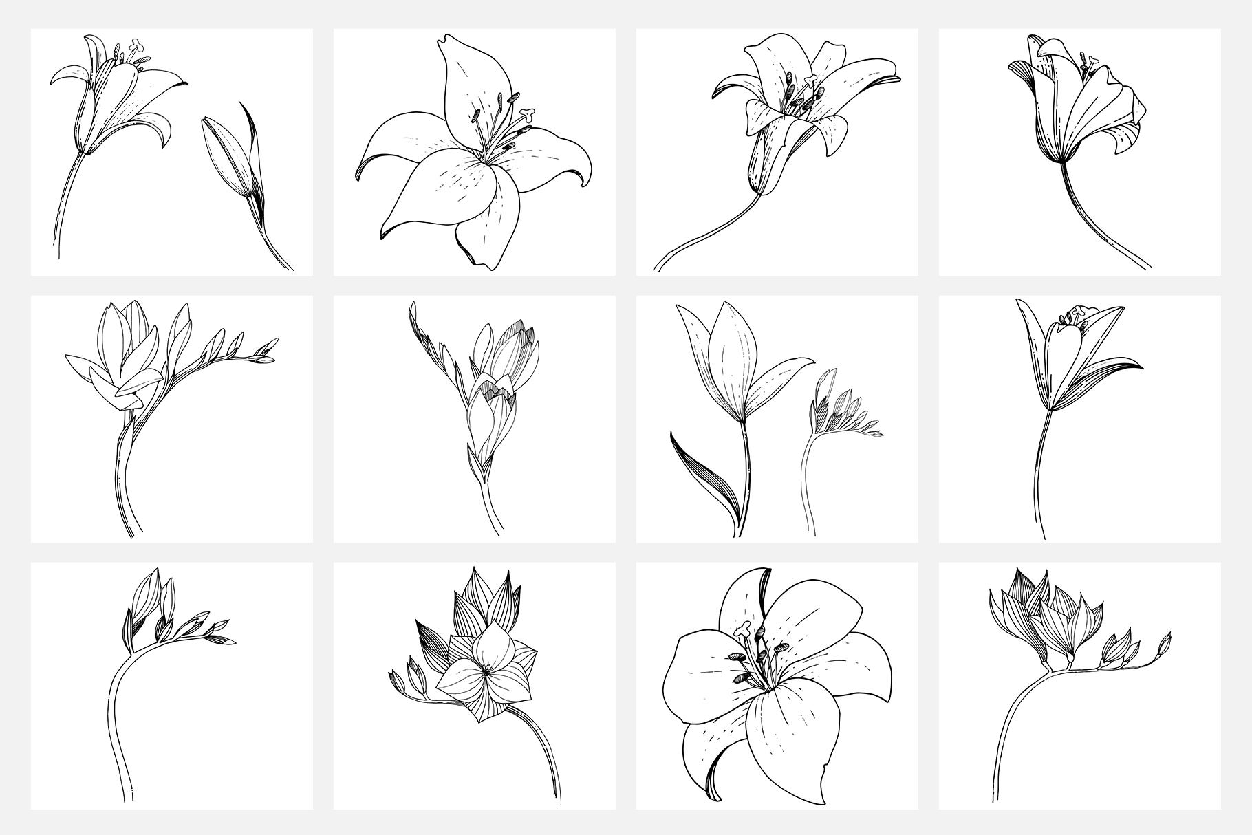 Vector illustration of Freesia flower watercolor png example image 10