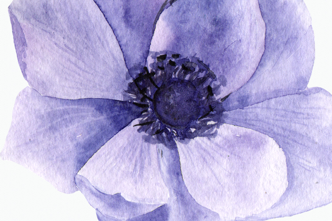 Purple Anemone Watercolor Clip Art Set + Wreath example image 4