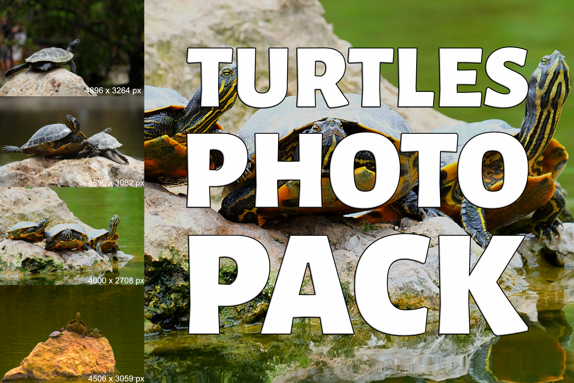 Turtle Photo Pack example image 1
