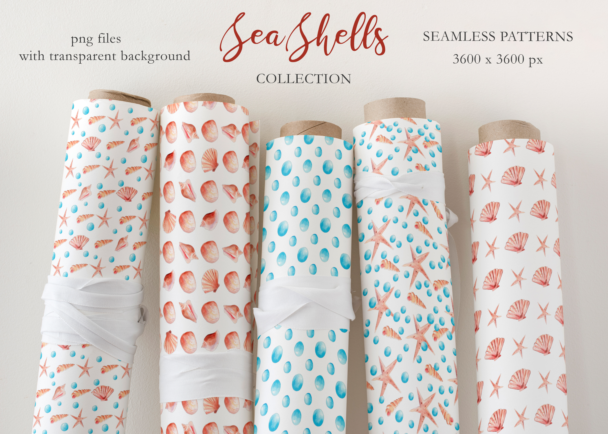 Seashells Clipart Collection example image 9