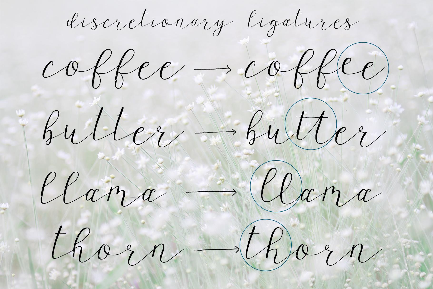 Wagonwheel Delicate Handwritten Script Font example image 6