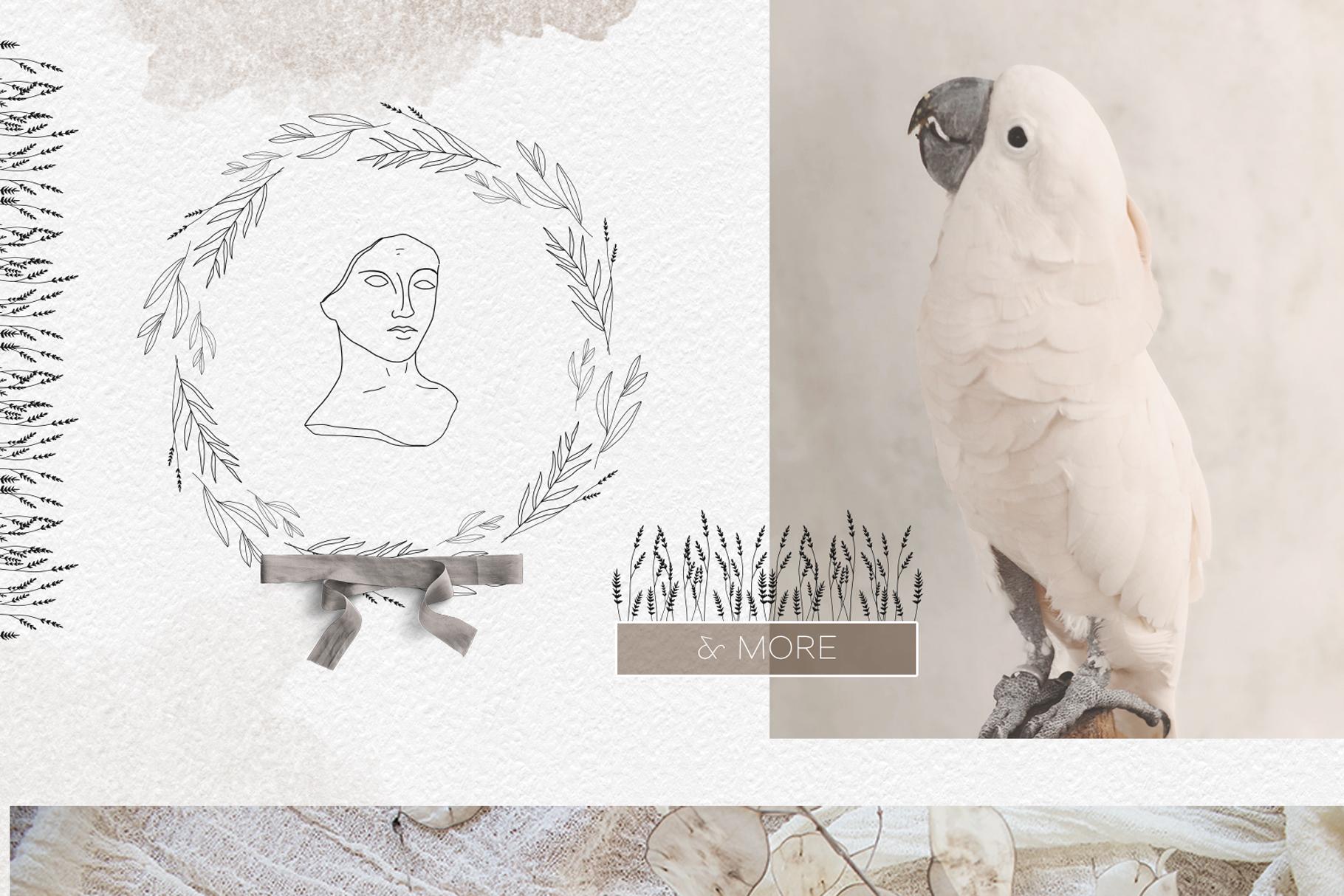Line art botanical illustrations example image 8