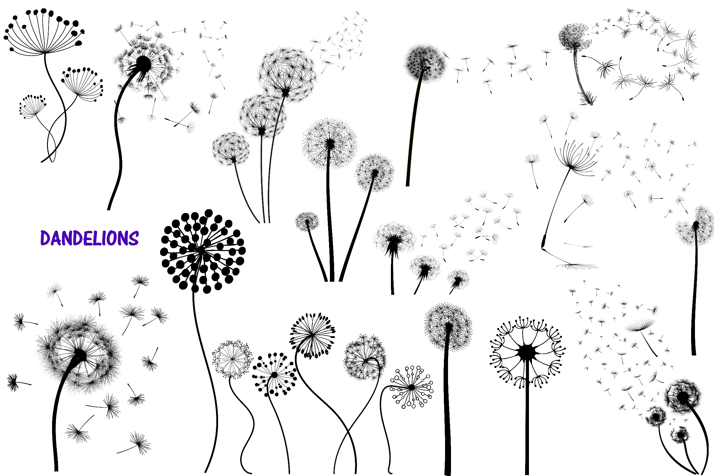 Dandelions and Overlays and Word Art AI EPS PNG example image 3