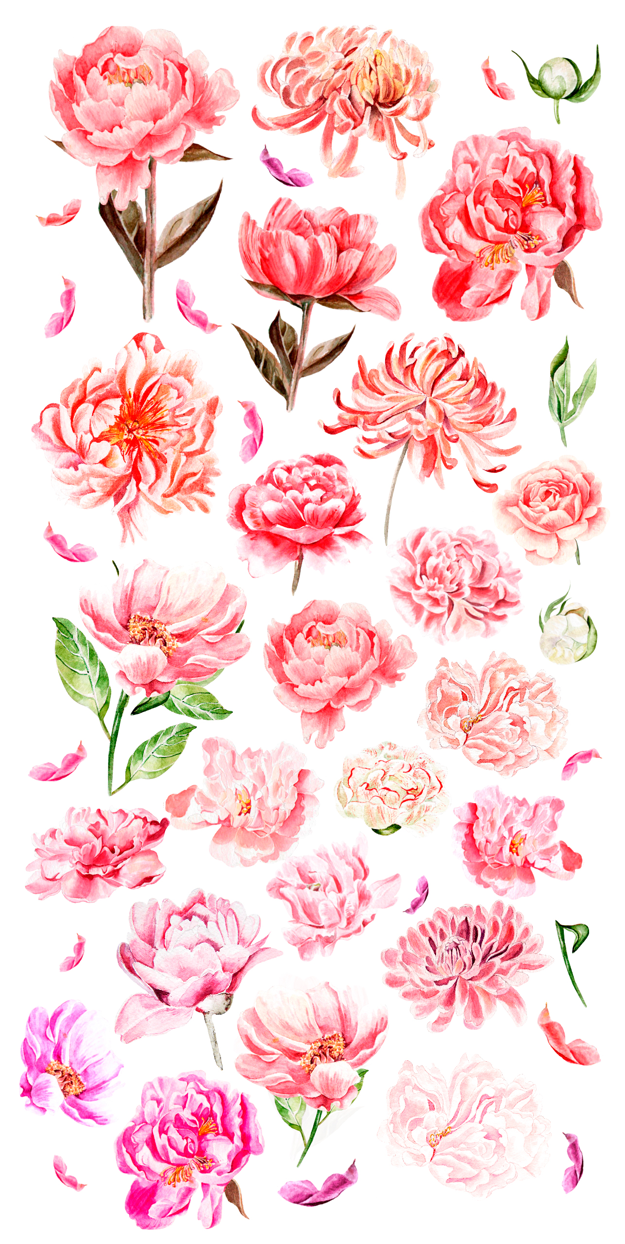 Hand Drawn watercolor Peony example image 2