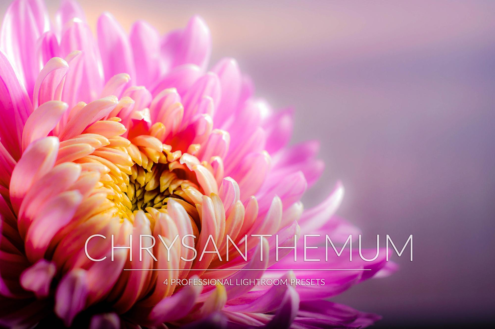 Chrysanthemum Lr Presets example image 1