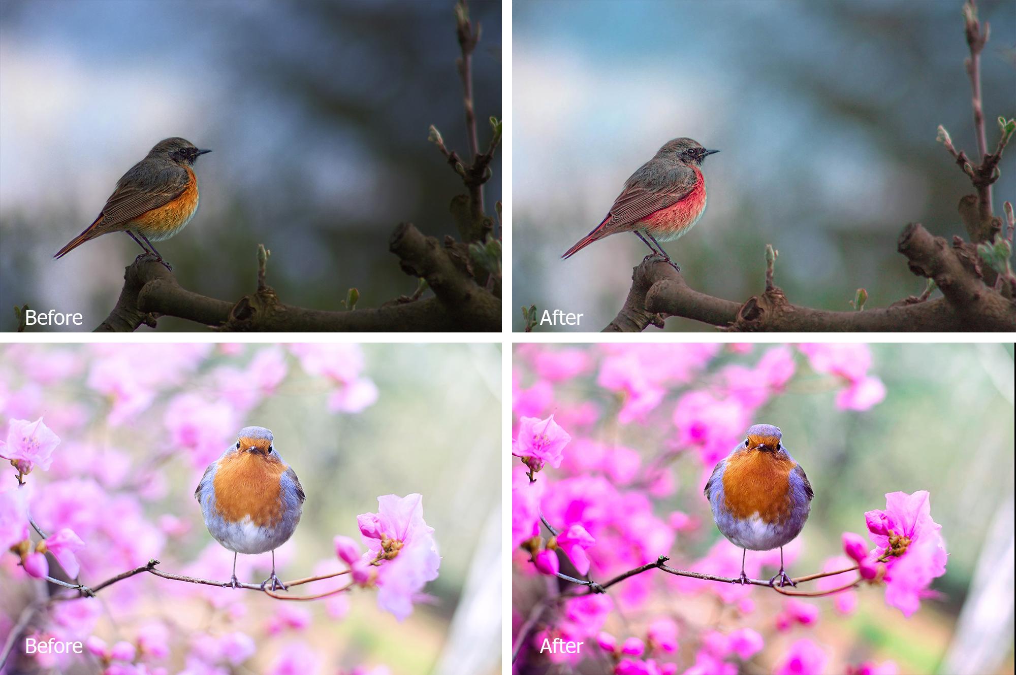 Birds Lr Presets example image 4