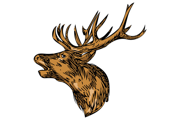 Red Deer Stag Head Roaring Drawing example image 1
