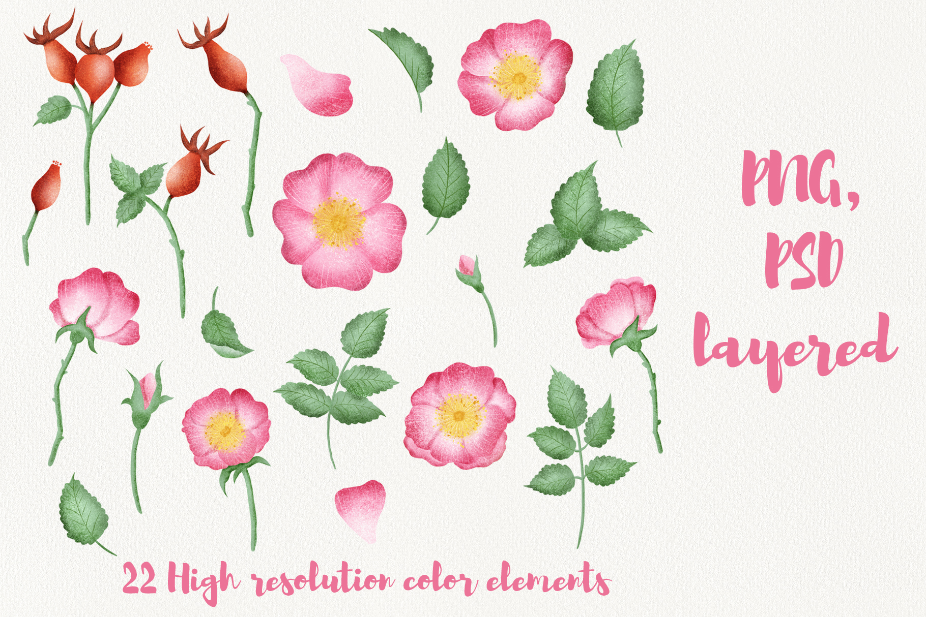 Wild Rose Clipart Rose Hip example image 3
