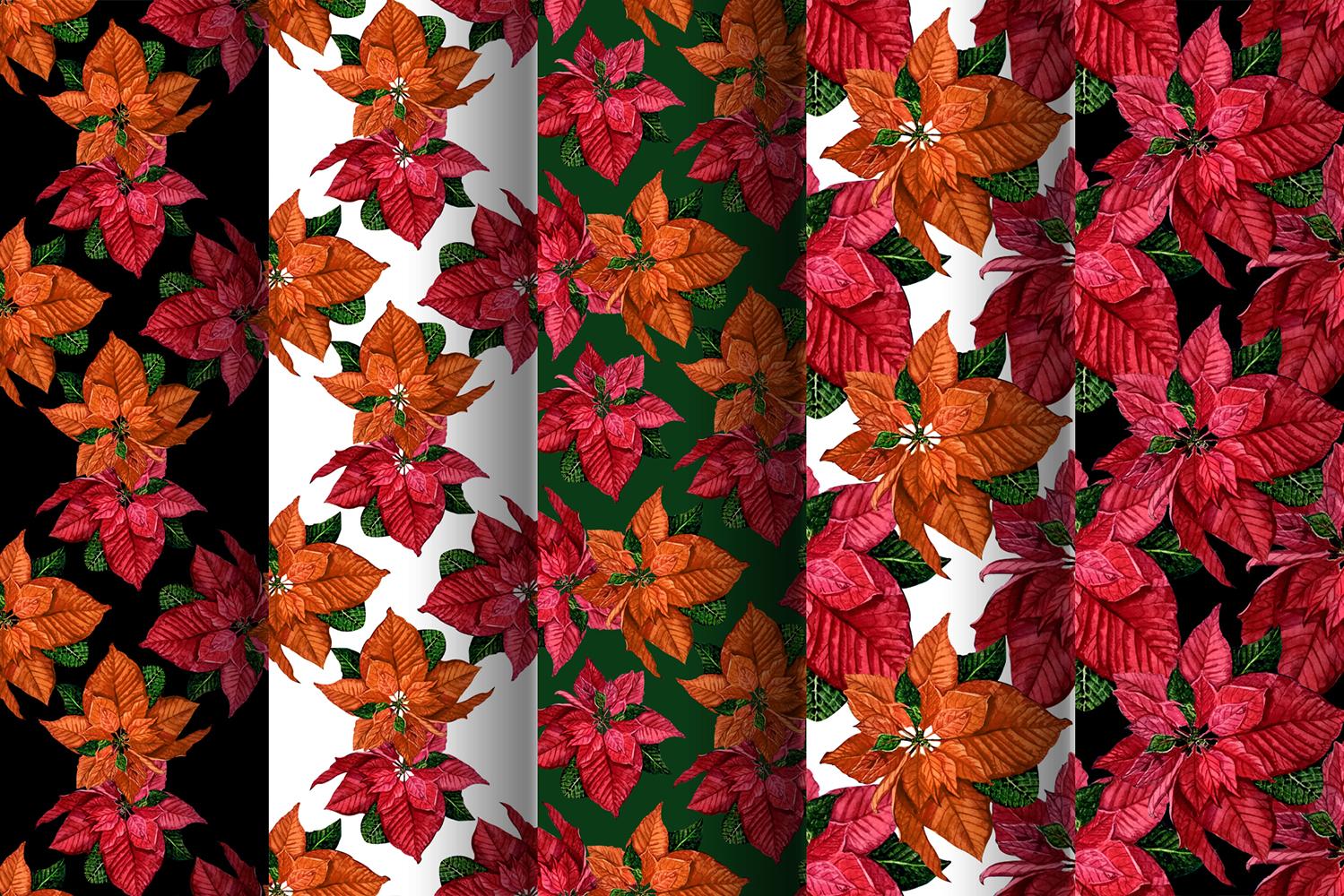 Poinsettia Watercolor Clip Art example image 4