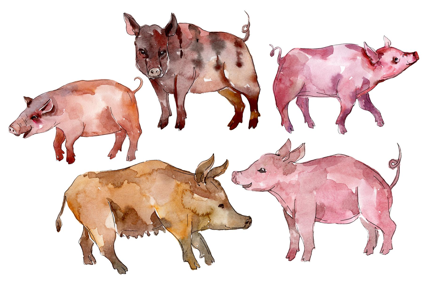 Farm animals pig boar Watercolor png example image 1
