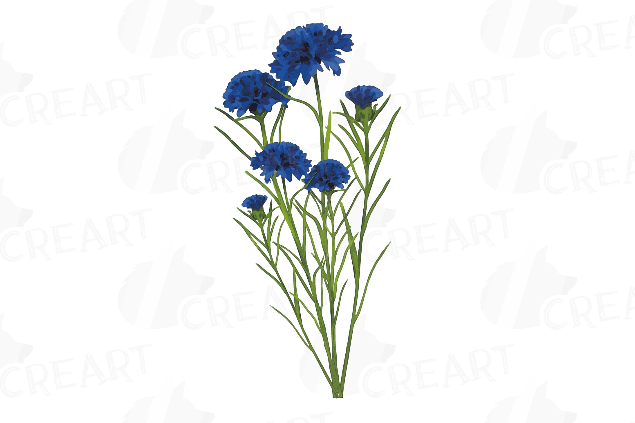 Cornflower watercolor clip art pack, bachelor's button example image 13