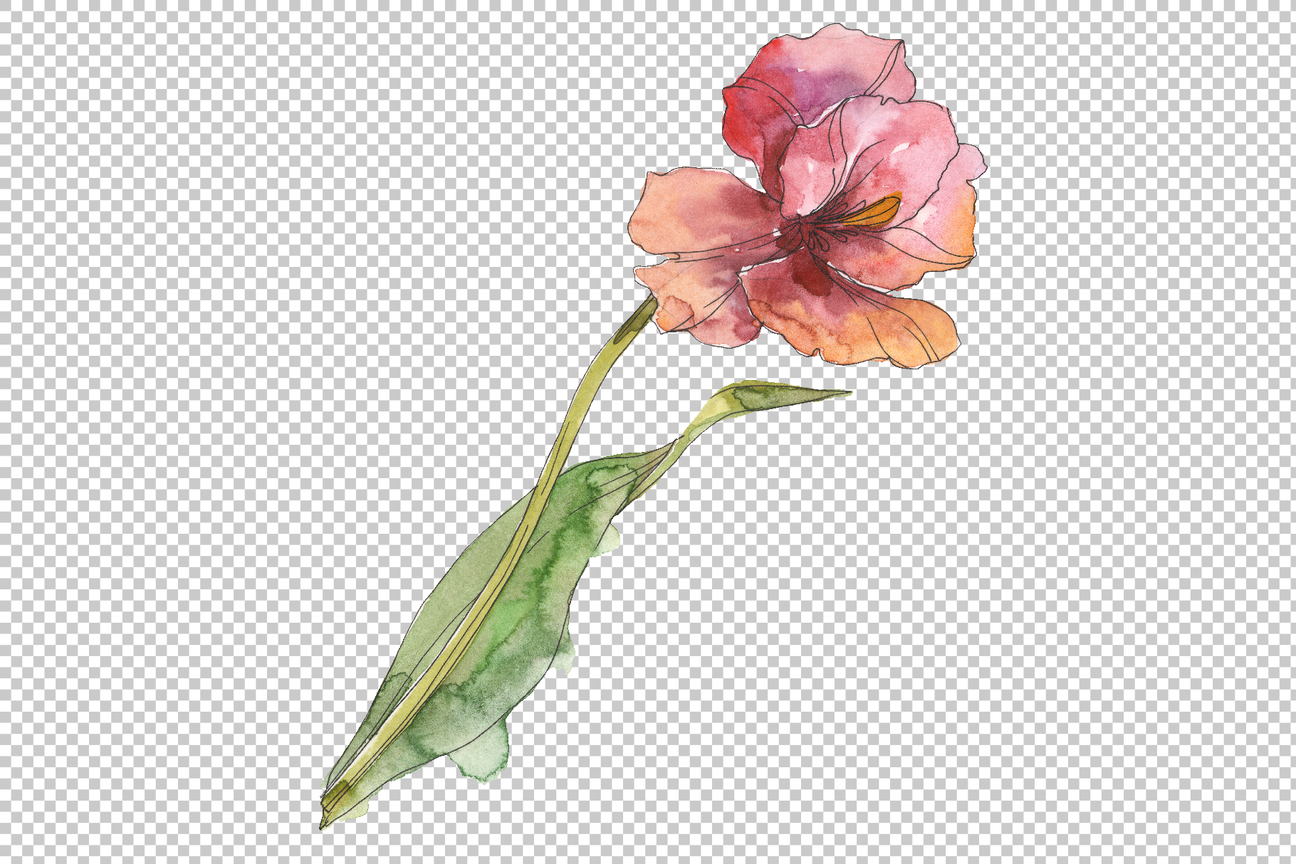 Assorted tulip bouquet Watercolor png example image 3