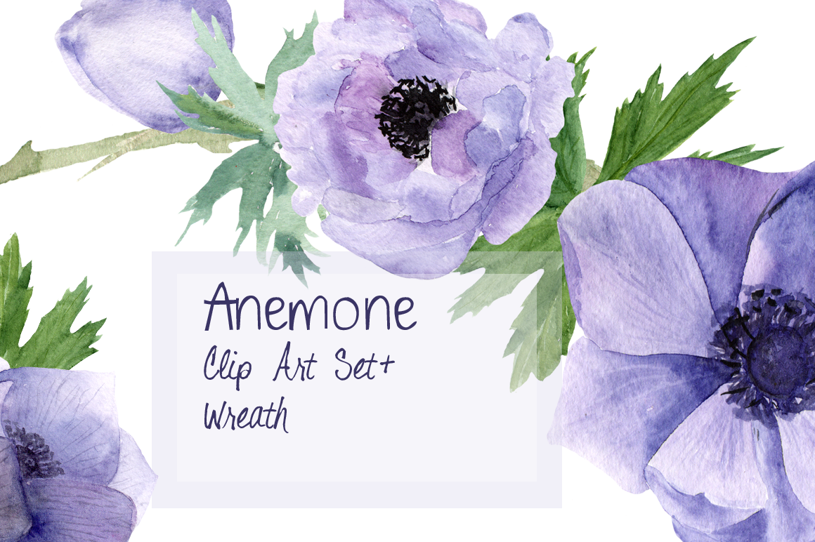 Purple Anemone Watercolor Clip Art Set + Wreath example image 1