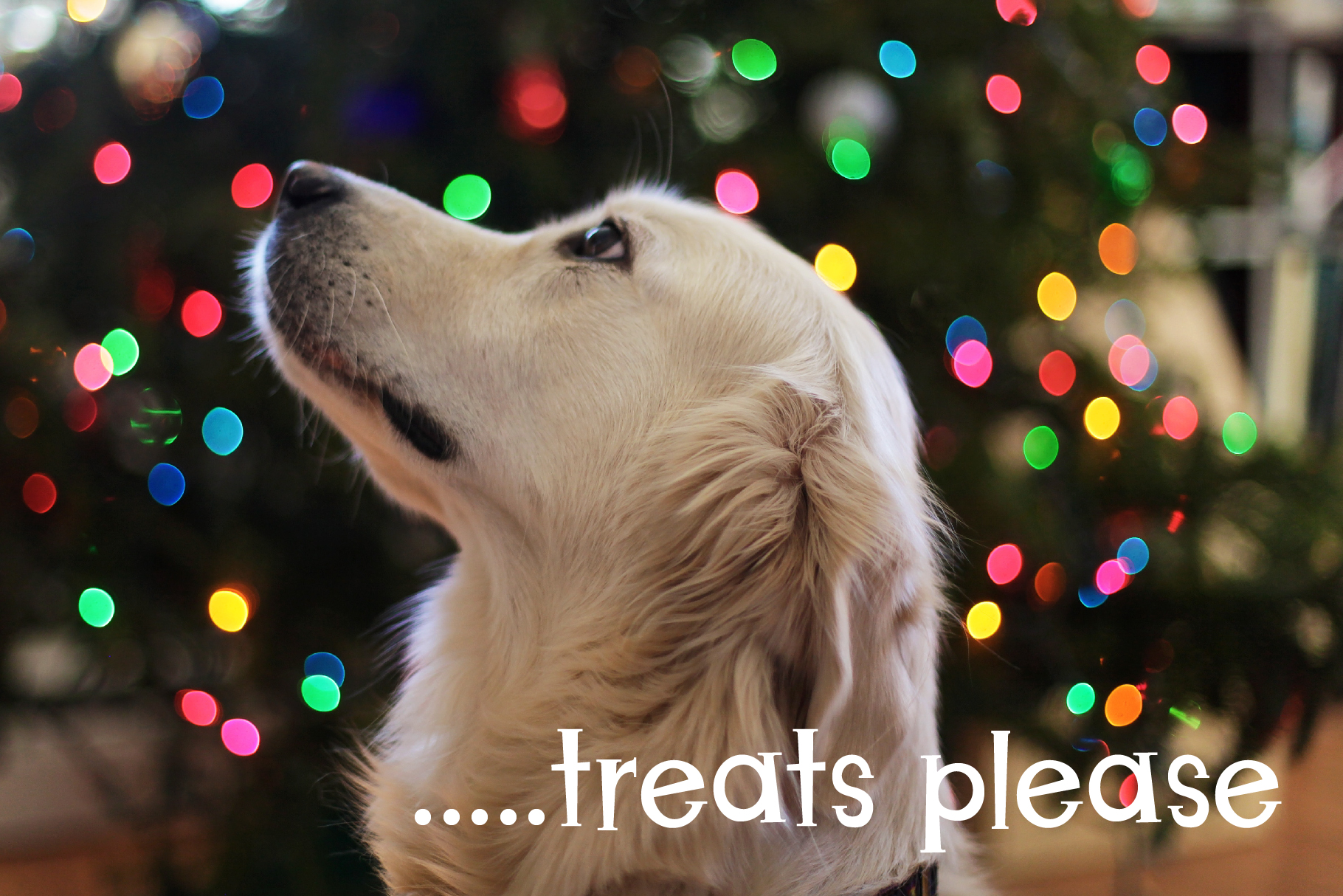Christmas Puppies Font Pair example image 7