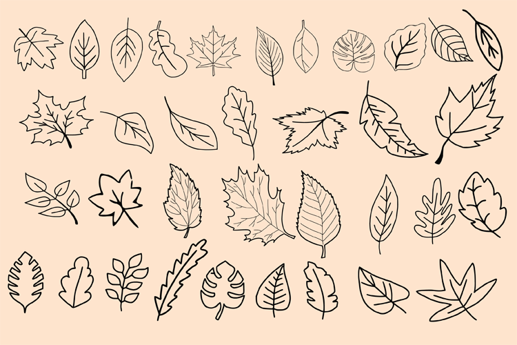 Dividers And Leaves example image 7