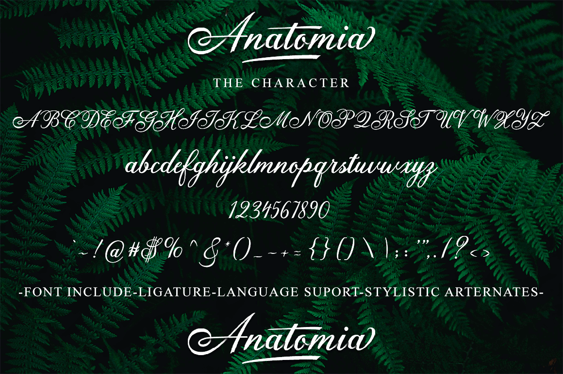 Anatomia Script example image 9