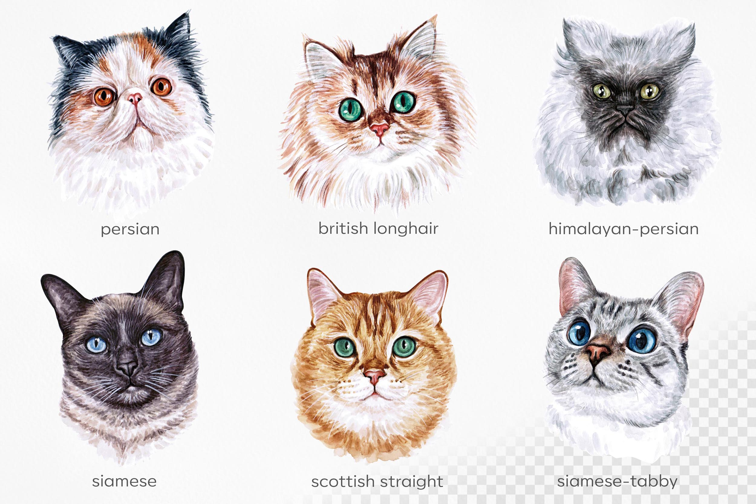 Watercolor 18 cat breeds illustrations. Cute cat. Meow. example image 5