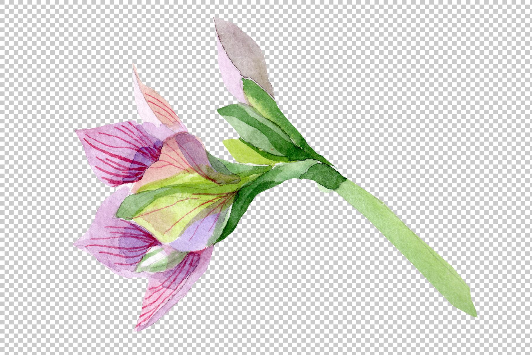 Purple amaryllis PNG watercolor flower set example image 6