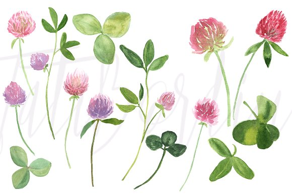 17 Watercolor Clover Clip Art example image 2