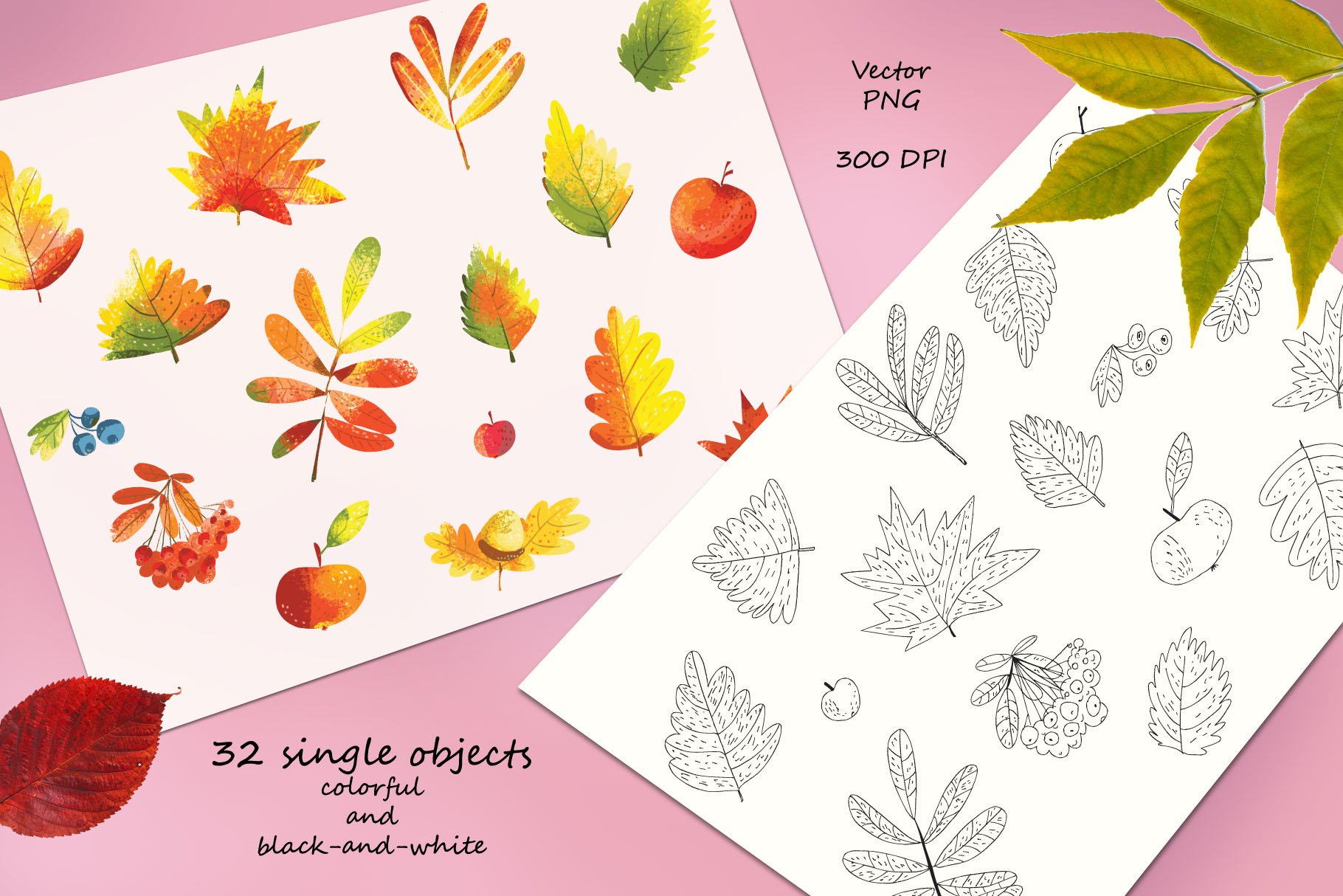 Autumn Leaves - over 30 objects, frames, patterns example image 9