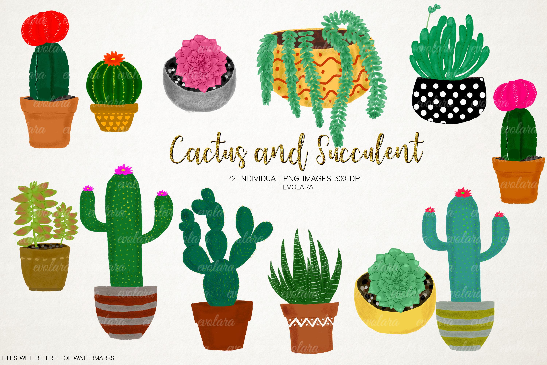 Cactus boho. Clipart succulents plant