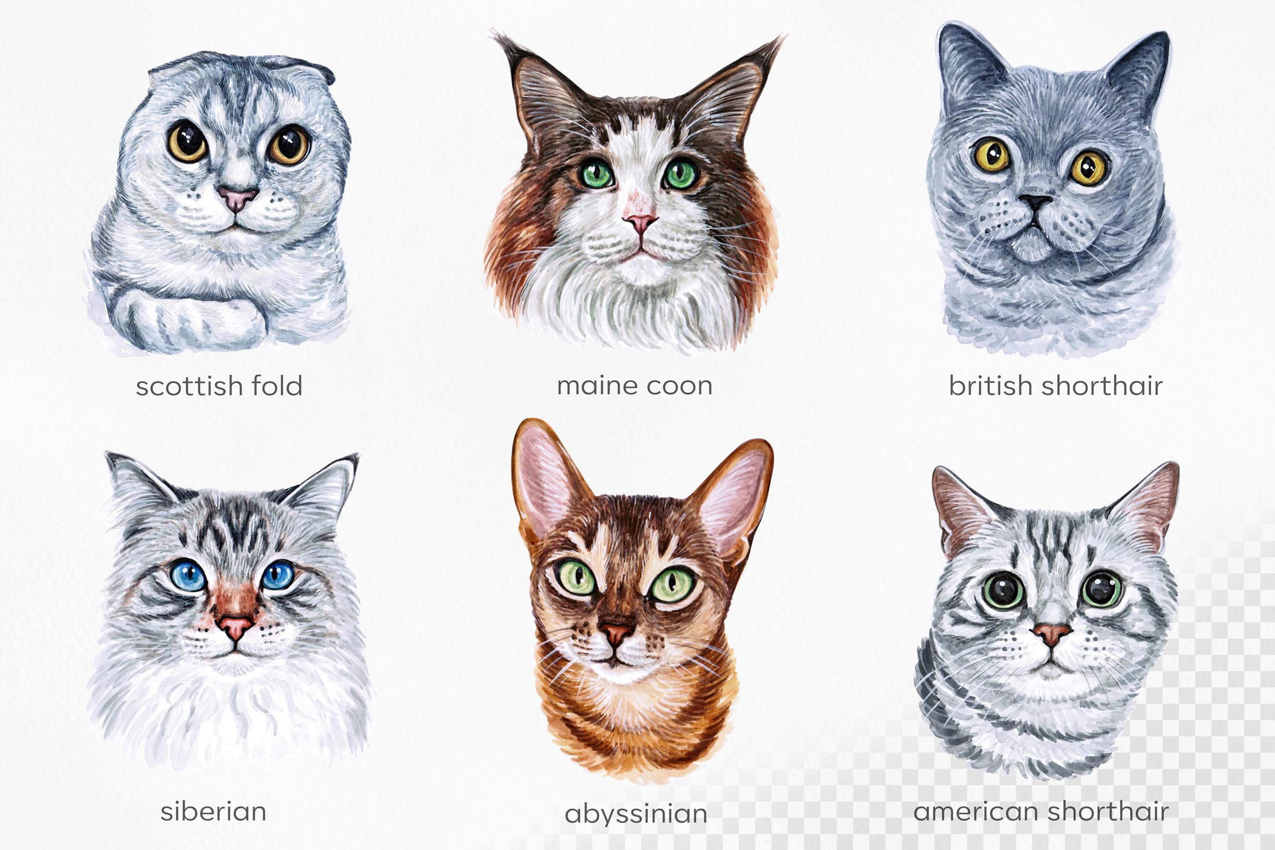 Watercolor 18 cat breeds illustrations. Cute cat. Meow. example image 3
