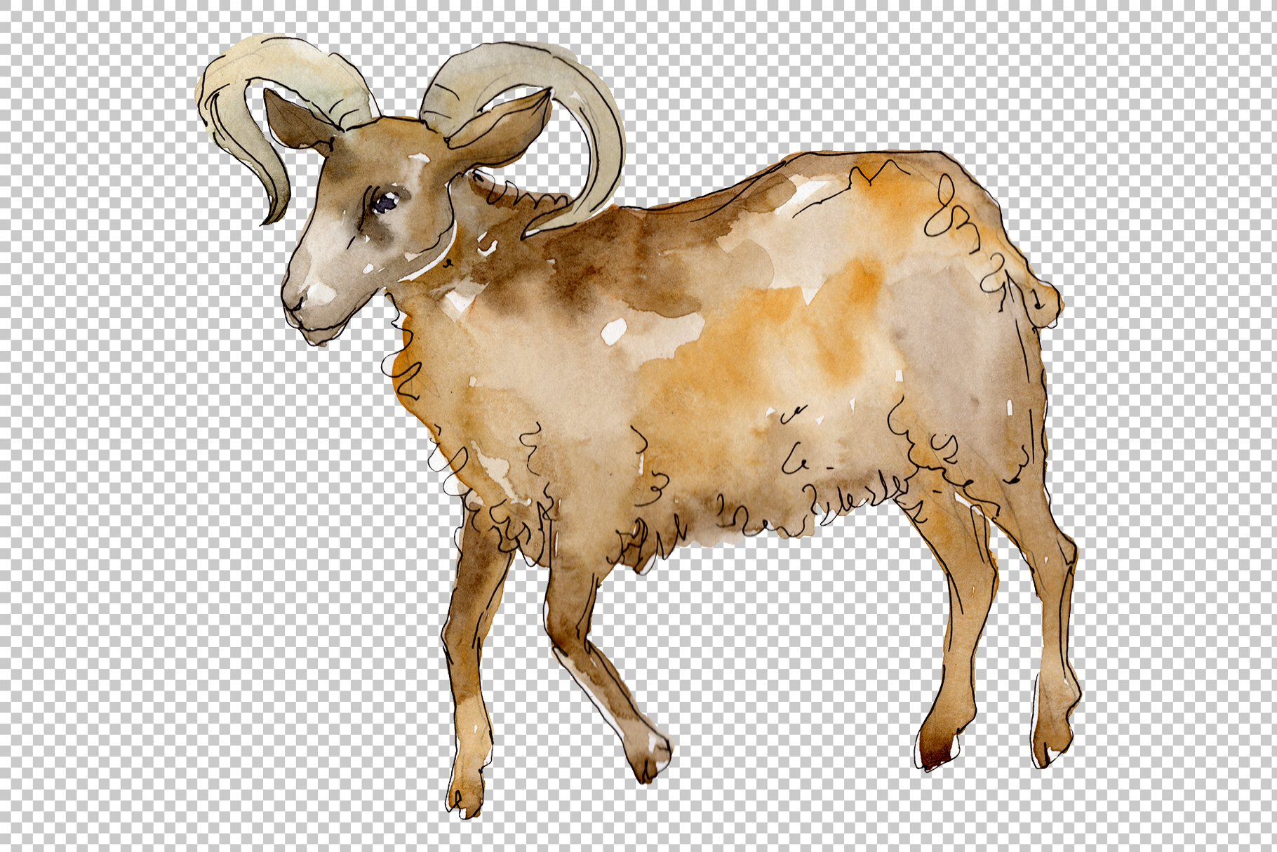 Farm animals Ram Watercolor png example image 7