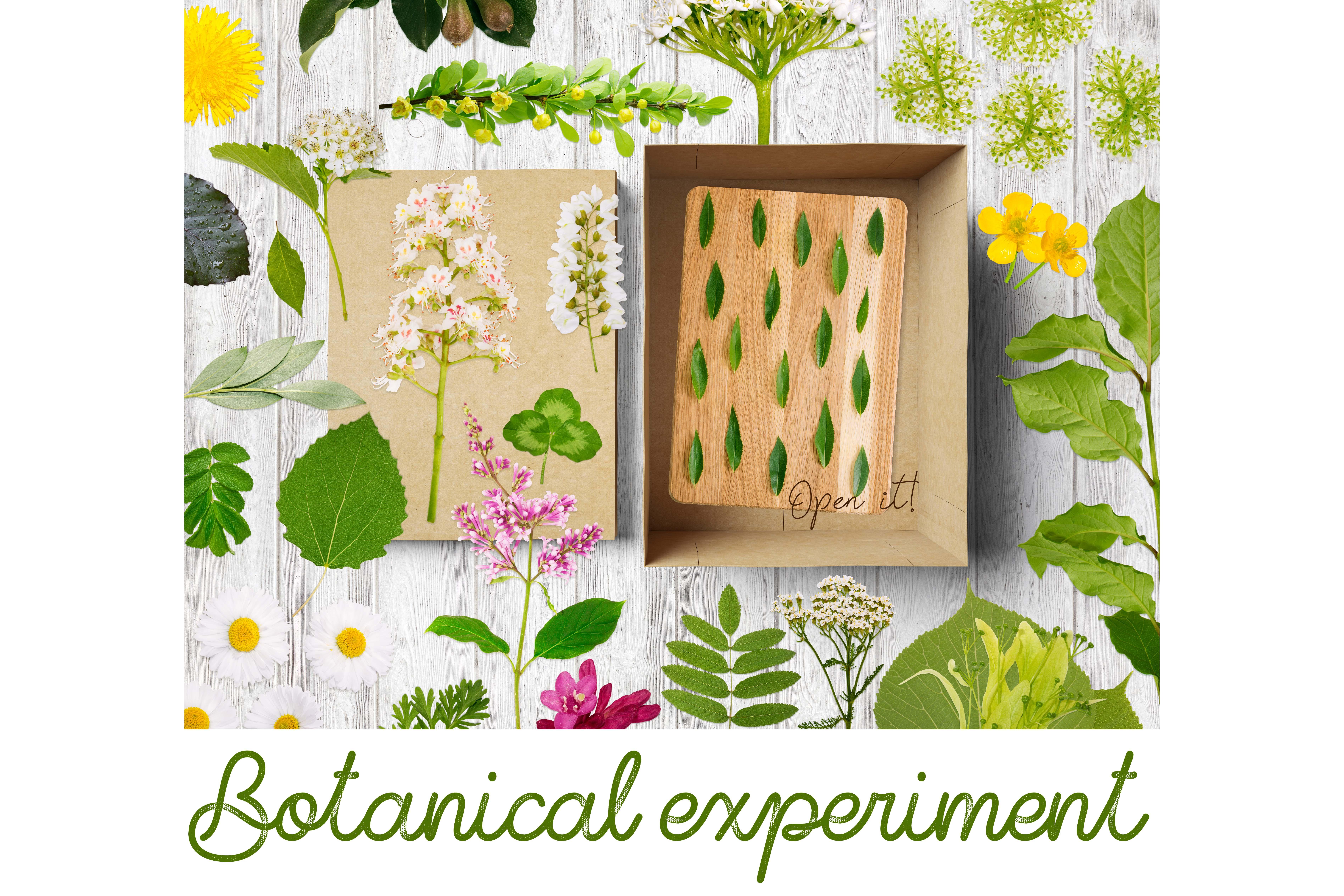 BOTANICAL EXPERIMENT example image 8