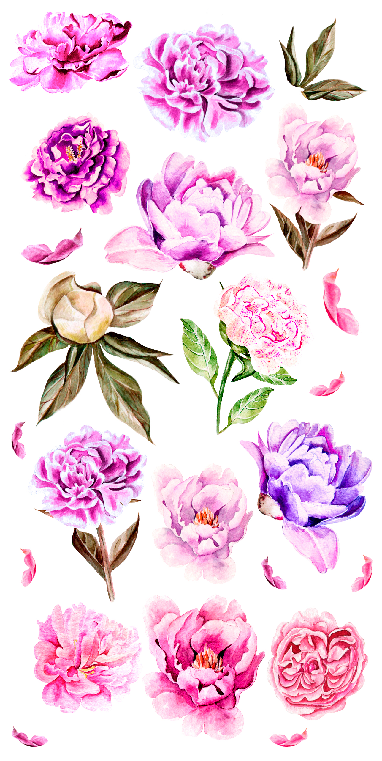 Hand Drawn watercolor Peony example image 4