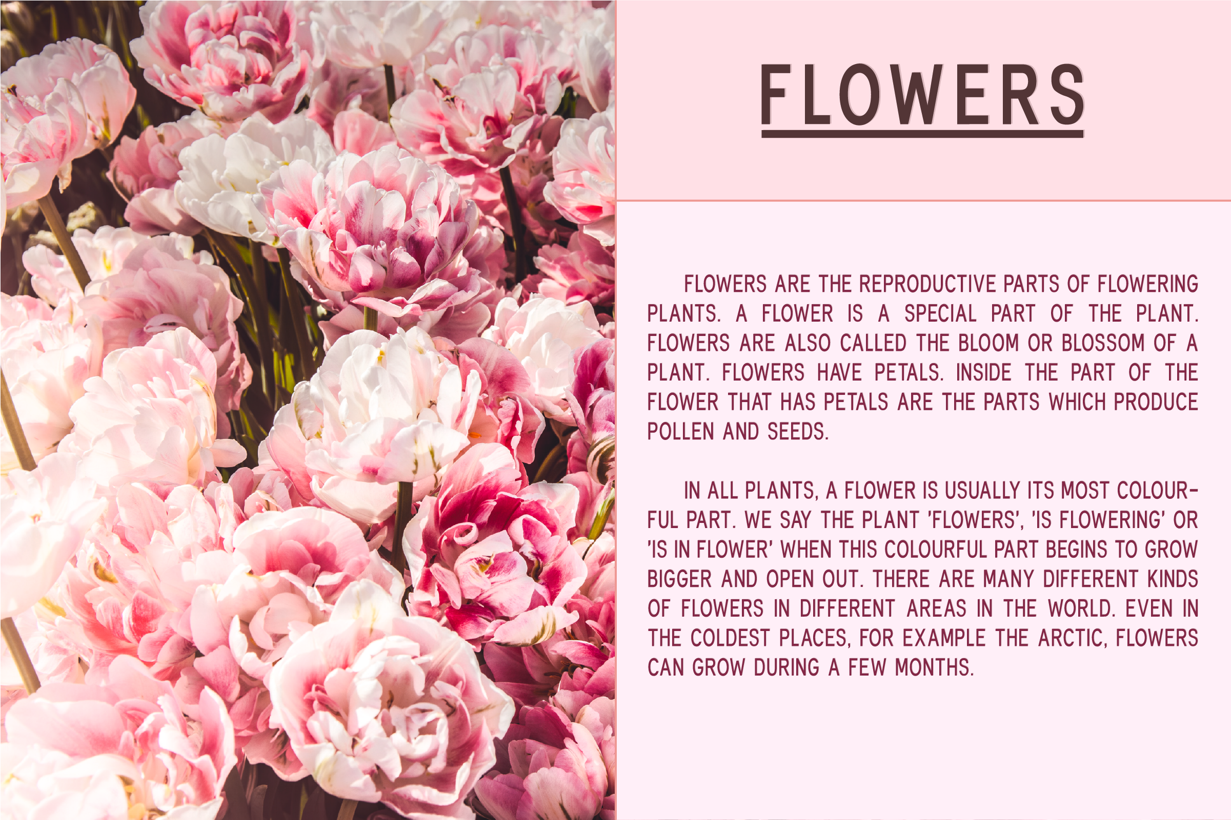 Fonthana l 3 Style Classy Font example image 2